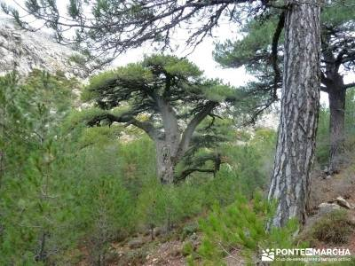 Cazorla - Río Borosa - Guadalquivir; viaje de fin de semana parque natural do xures viajes atapuerc
